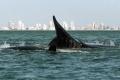 Uruguay, destino perfecto para el avistamiento de ballenas