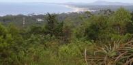 Arboretum Lussich. Un hermoso paseo para realizar a pocos kilómetros de Punta del Este.